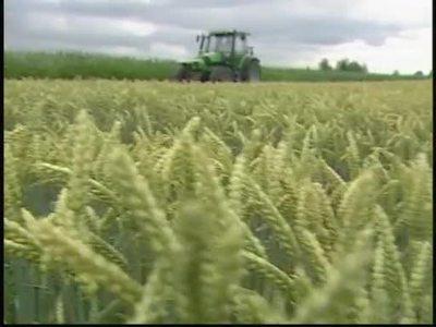 Getreidemangel - Nutzung von Getreide für Energieerzeugung