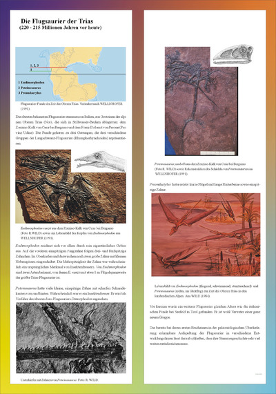 Ausstellungstafel 12 der Sonderausstellung Drachen der Lüfte