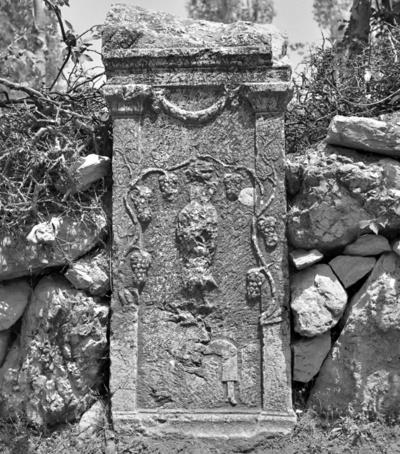 MAMA XI 19 (Apollonia)
