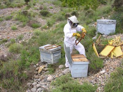 Justo Sorando Gómez, recollint mel de les seves arnes.