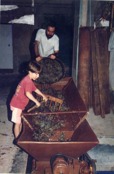 Verema i vinificació. Joan Humet i el seu fill, abocant el raïm de les portadores a la màquina de xafar o triturar el raïm al celler abans de la premsada