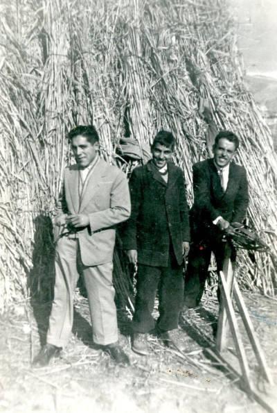 Tres guixaires amb canyes a Tremp.