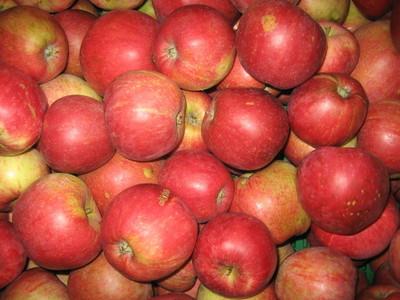 Epler i samling - epler på vandring