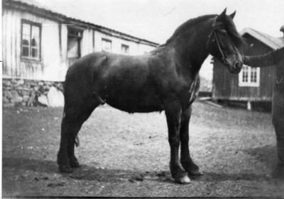 Trond Tuv med hesten