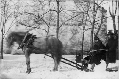 hest, slede, kusk, passasjer, snø, trær