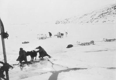 Lokalbåten D/S Varanger ved iskanten i Bøkfjorden. En okse skal ombord.