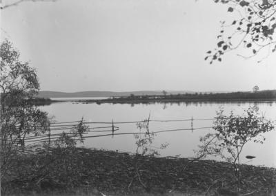 Gjerde av staur/rajer som går ut i Pasvikelva. Salmijärvi/Svanvik.