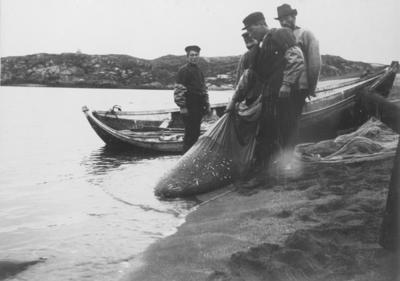 Siilfangst med dragnot i Grense Jakobselv 1905. Fra venstre: Einar Dahl, Hans Kaspersen, Håkon Dahl og Nikolai Nilsen.
