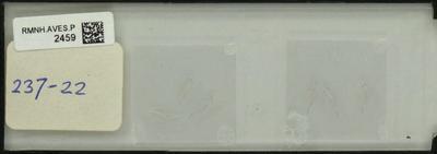 Lanius collurio