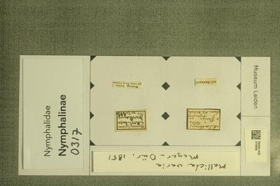 Mellicta varia (Meyer-Dür, 1851)