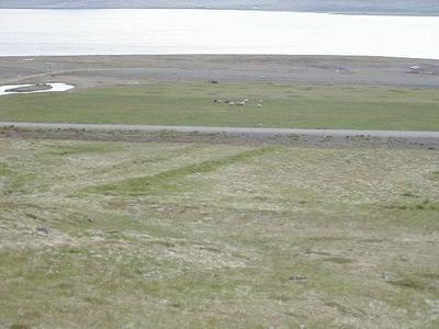 47000501. Þrælsgerði á Alviðru 3.