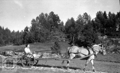 Maria Røynesdal klar for oppdrag med langkjerre og hest