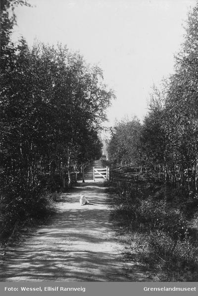 Prestegårdsveien sett nedover mot kirken