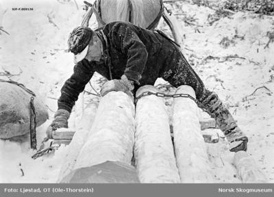 Lessing under tømmerkjøring i Nordre Osen (Åmot kommune i Hedmark) i februar 1980