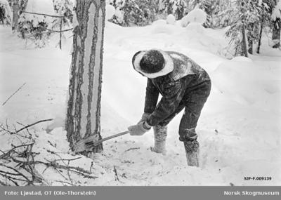 Tømmerhogst i Nordre Osen (Åmot kommune i Hedmark) i februar 1980