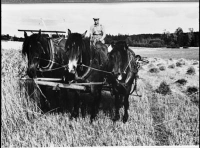Markus Enger på selvbinder forspent tre hester