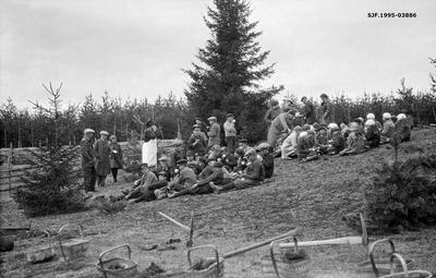 Fra planteprosjekt for skoleelever på garden Ulven i Ring-fjerdingen i Ringsaker kommune i Hedmark i 1928