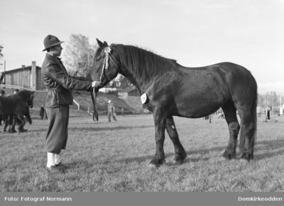 Hesteutstilling