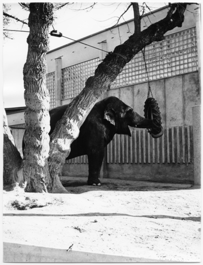 Skansen Elefanthus. Exteriör med elefant
