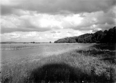 Biotop för Podiceps cristatus (Skäggdopping) 12/6-1939
