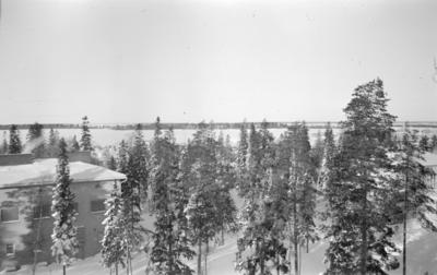 Utsikt från F 19, Svenska frivilligkåren i Finland. Byggnad, tallskog och Kemi älv.