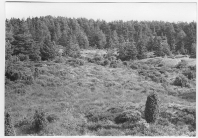 'Bildtext: ''Sankt område i hällandskap. Riktning 112.'' :: Vy över öppnare, fuktigt parti och omkring detta trädvegetation av furu, enbuskar och gran. ::  :: Ingår i serie med fotonr. 6970:1-1125, dokumentation av Hisingens naturgeografi, visande landskapsformerna i stora drag och gjord inför exploateringen av området. Platserna för fotograferingen finns utsatta på karta i skala 1:4000 som finns på Göteborgs Naturhistoriska musem. Fotoriktningen mättes med kompass i gammalgrader.'