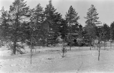 Flygplan Gloster Gladiator tillhörande F 19, Svenska frivilligkåren i Finland, kamouflerad i skogsterräng.