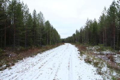 Vuokin reitin polkua on jäänyt metsäautotien alle noin 800 metrin pituudelta. Tietä rajavyöhykkeellä. Kuvattu idästä.