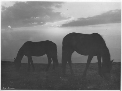 Amurg cu cai în Ceahlău