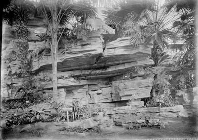 Jardin botanique de Bruxelles : Grand rocher du Jardin d'hiver - fougères #0087