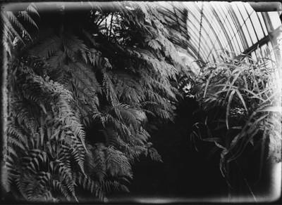 Jardin botanique de Bruxelles : Palais des fougères #0216