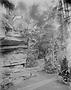 Jardin botanique de Bruxelles : Grand rocher du Jardin d'hiver - fougères #0086