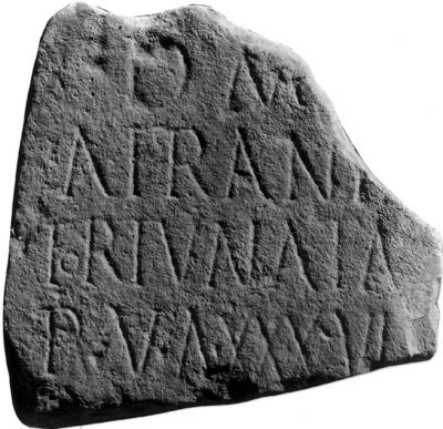 Afrania Fortunata (36 ans)