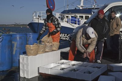 Descarga de pescado