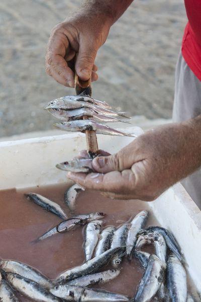 Elaboración de espetos de sardinas