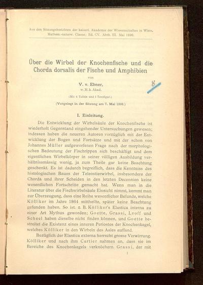 Über die Wirbel der Knochenfische und die Chorda dorsalis der Fische und Amphibien : (vorgelegt in der Sitzung am 7. Mai 1896)