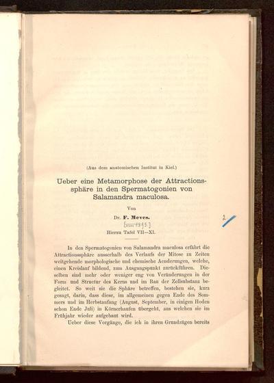 Ueber eine Metamorphose der Attractionssphäre in den Spermatogonien von Salamandra maculosa : (aus dem anatomischen Institut in Kiel)