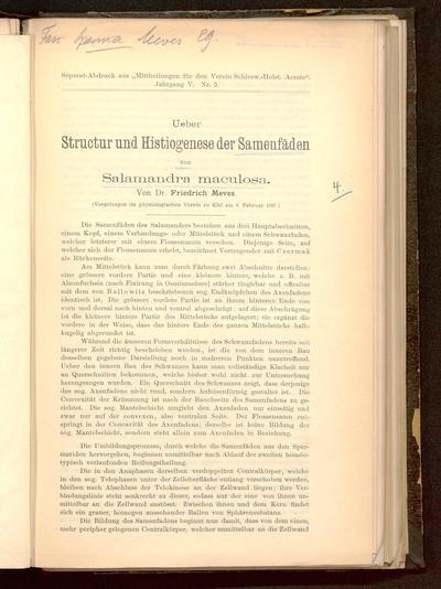Ueber Structur und Histiogenese der Samenfäden von Salamandra maculosa : (vorgetragen im physiologischen Verein zu Kiel am 8. Februar 1897)
