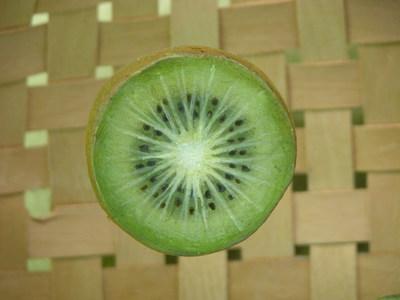 Actinidia chinensis (Modell Kiwi (halbierte Frucht))