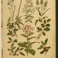 Nos fleurs, plantes utiles et nuisibles