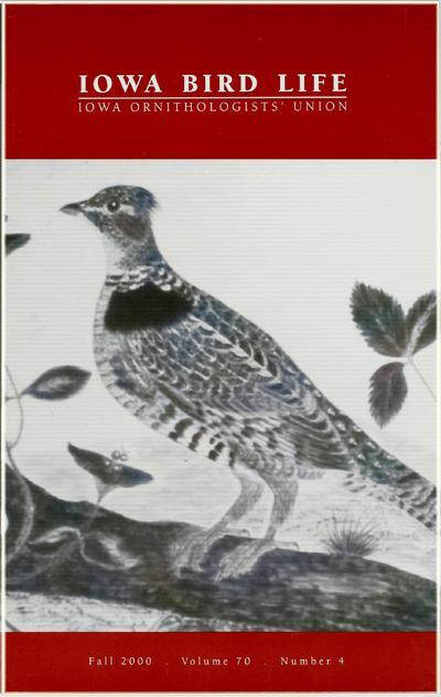 Iowa bird life