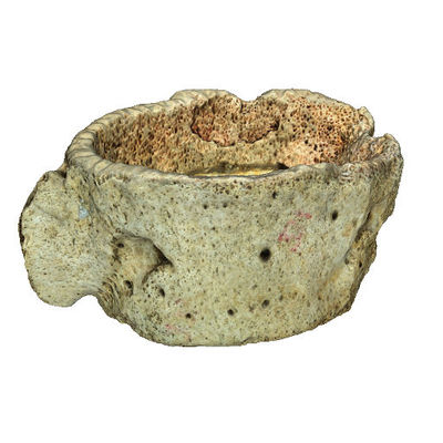 3D Model of Skara Brae Artefact HA586