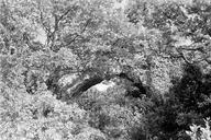 Vue générale de face des arches doubles dans la végétation (L'Avellan Fréjus, Var).