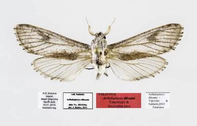 Medgręžis (Aethalopteryx diksami)