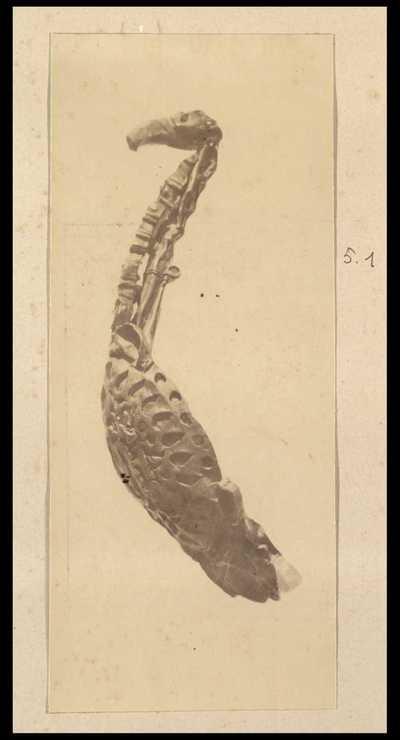 Fibula con pendagli a forma di uccello con lungo collo e becco adunco. Dettaglio