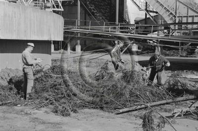 Osapuun tehdasmittaus. Kolmen miehen ryhmä tehdasalueella puutavaran mittaustyössä.