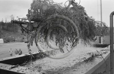 Osapuun tuoretiheyden mittausta veteen upottamalla. Pienpuuta nostetaan nosturilla upotusaltaaseen Enso-Gutzeit Oy:n Imatran tehdasalueella.