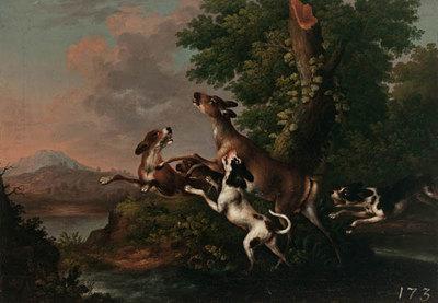 Hunde hetzen eine Hirschkuh