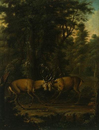 Zwei kämpfende Hirsche