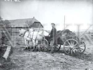 Fotonegatīvs. Mēslu vešana Talsu apriņķa Laidzes pagasta Sniķeru māju saimniecībā.